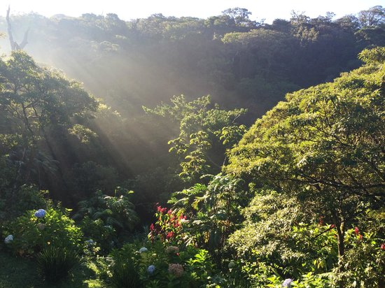 Monteverde Lodge & Gardens: View from Room