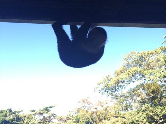 Monteverde Lodge & Gardens: Monkey