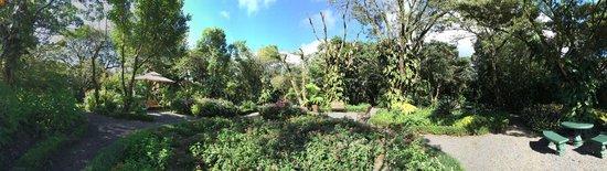 Monteverde Lodge & Gardens: Gardens !