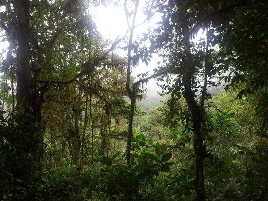 El Silencio de Los Angeles Cloud Forest Reserve: Madre naturaleza
