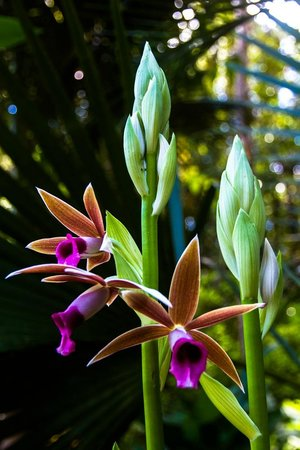 The Ohia House: Orchid on beautifully maintained garden
