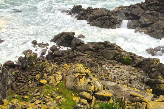 Cape Foulwind Walkway: Seals...