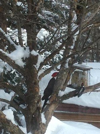Silent Sport Lodge Bed and Breakfast: birds at feeder in the yard