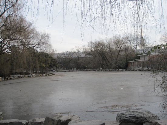 park inside beijing zoo in winter