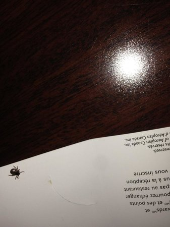 Lethbridge, Kanada: Bugs crawling on bed