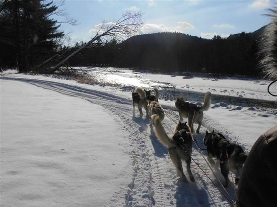 Valley Snow Dogz: Tours At the Sugar Shack in Thornton NH