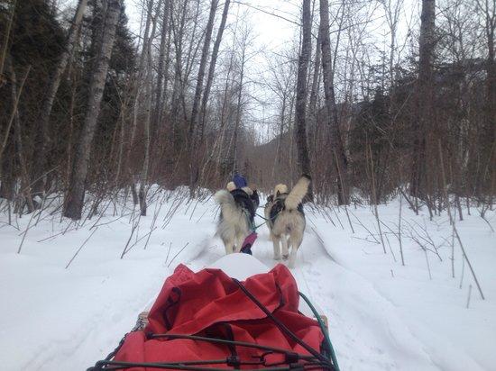 Entre chien et loup: L'attelage