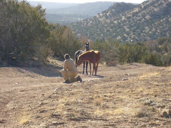 New Mexico Jeep Tours: Roch and 2 wild horses entice each other