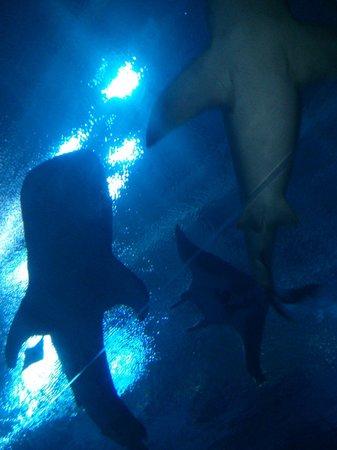 Georgia Aquarium: Tunnel under the sea