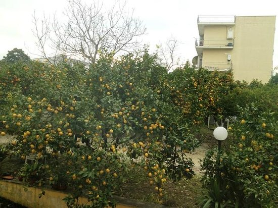 Hotel Iside : Lemon tree view from breakfast room