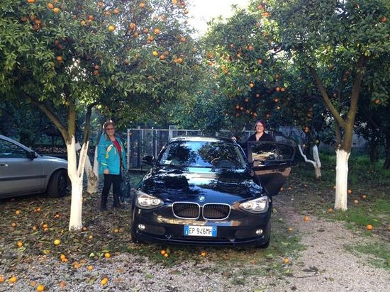 Hotel Iside : car parked under orange trees