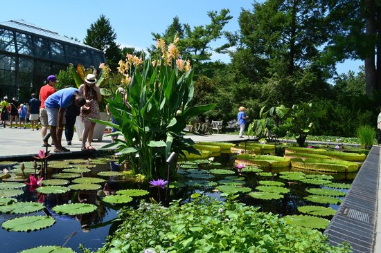 Longwood Gardens: OUTSIDE PONDS