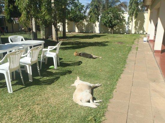 Ujamaa Hostel: Relaxing garden