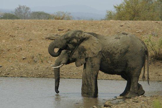 Camp Shawu: Elephants by the deck