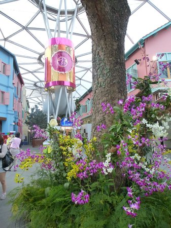 Clarke Quay : Orchids generously planted in flowerbeds
