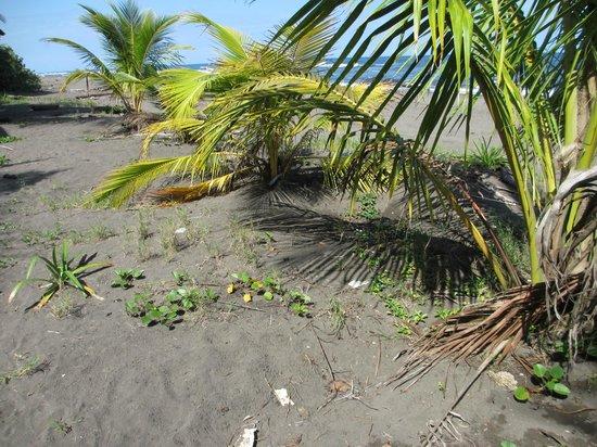 Jungle Tom Safaris Day Tours: Turtle Nesting Beach