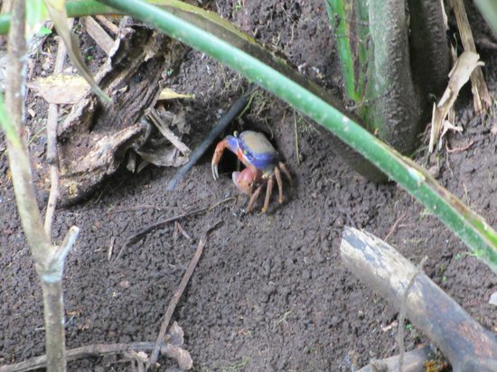 Jungle Tom Safaris Day Tours: Crab