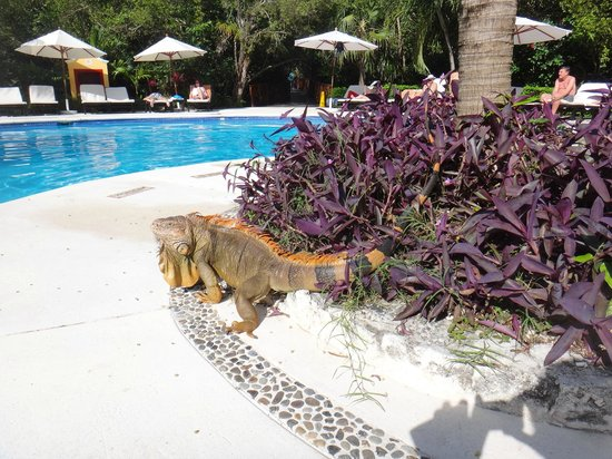 Occidental Cozumel: great wildlife