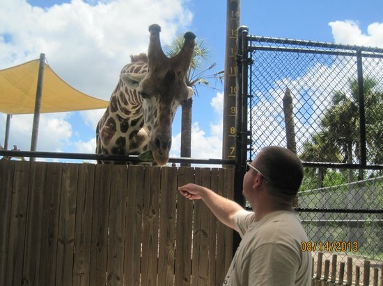 Naples Zoo at Caribbean Gardens: Feeding the giraffe
