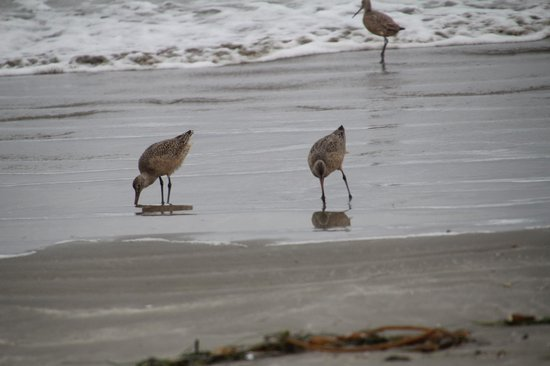 San Luis Bay Inn : Sand Pipers