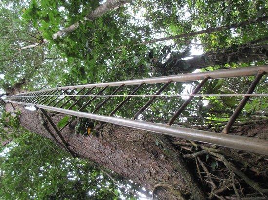 Costa Rica Fun Adventures: Zipline Ladder....