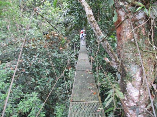 Costa Rica Fun Adventures: Suspension bridge
