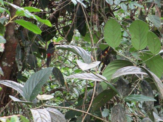 Costa Rica Fun Adventures: Toucans