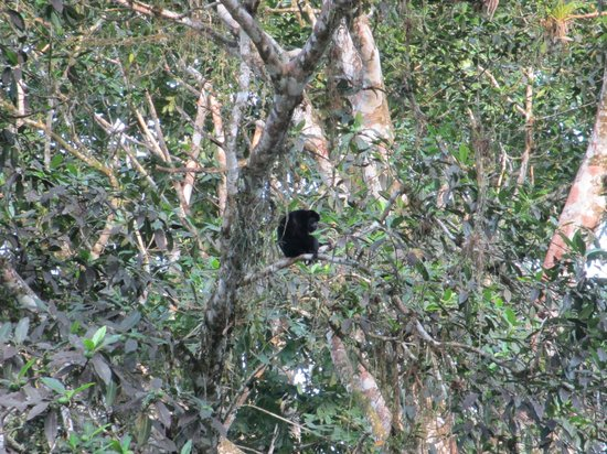 Costa Rica Fun Adventures: Monkeys