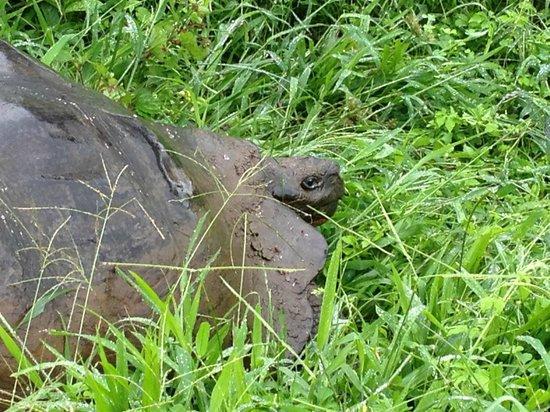 Reserva El Chato: El Chato Tortoise