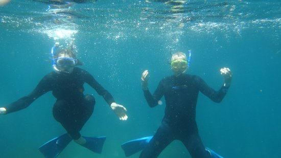 Perfect Day Ocean Cruise : Snorkelers