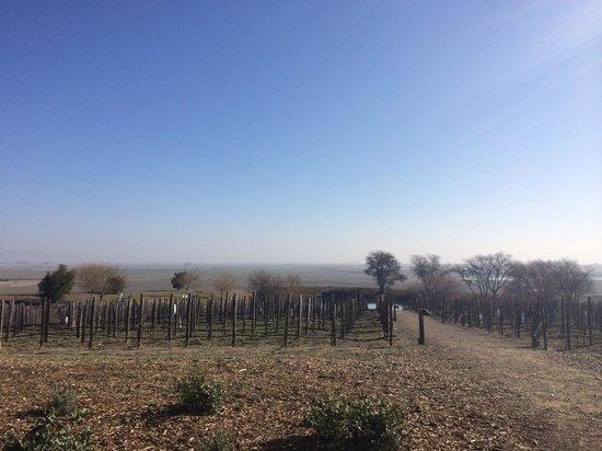 Beau Wine Tours: Ram's Gate view