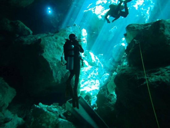 Deep Life Divers: I am captivated looking at the most amazing sight I think I have ever seen!