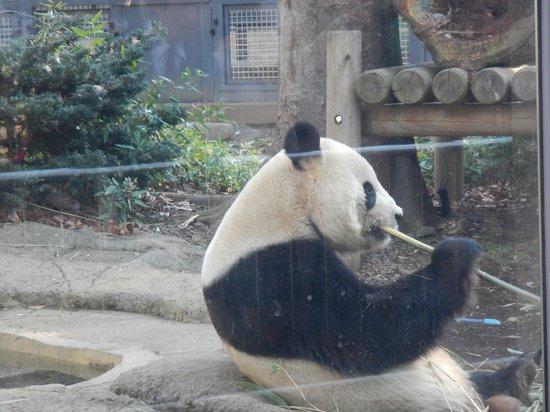 Ueno Zoo: Star attraction