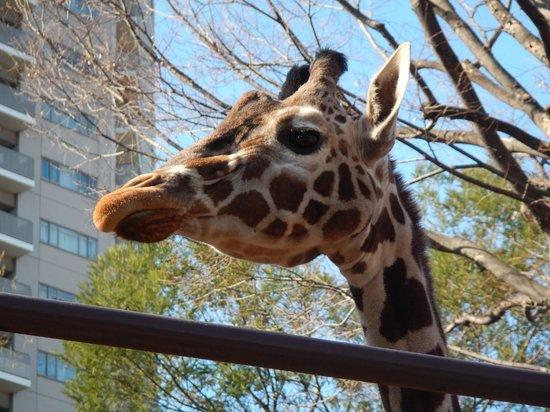 Ueno Zoo: Whose checking out who?
