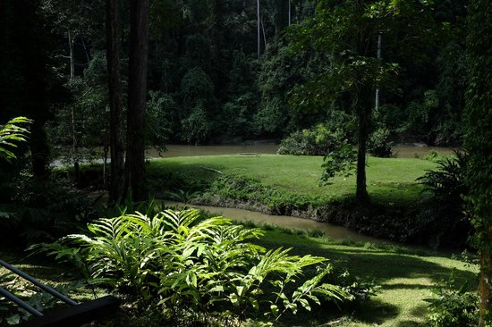 Borneo Rainforest Lodge: our backyard