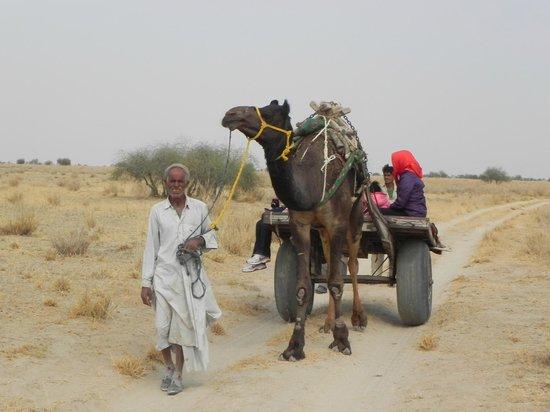 Desert National Park: Safari on camel cart