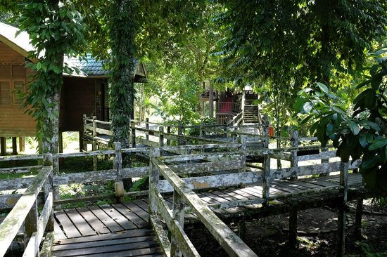 Borneo Rainforest Lodge: our chalet