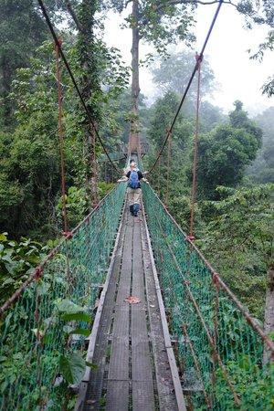 Borneo Rainforest Lodge: hanging bridge / canopy walk