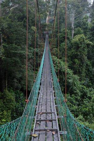 Borneo Rainforest Lodge hanging bridge / canopy walk & hanging bridge / canopy walk - Picture of Borneo Rainforest Lodge ...