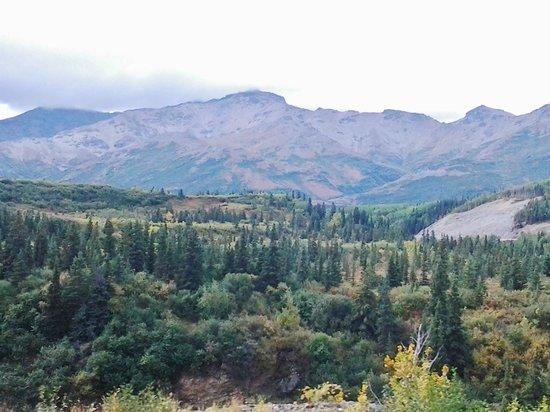 McKinley Explorer: From Fairbanks to Denali (7)
