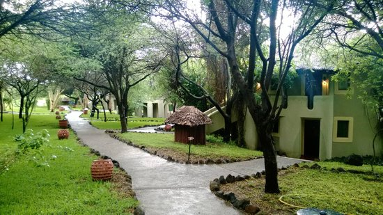 Lake Manyara Serena Lodge: path