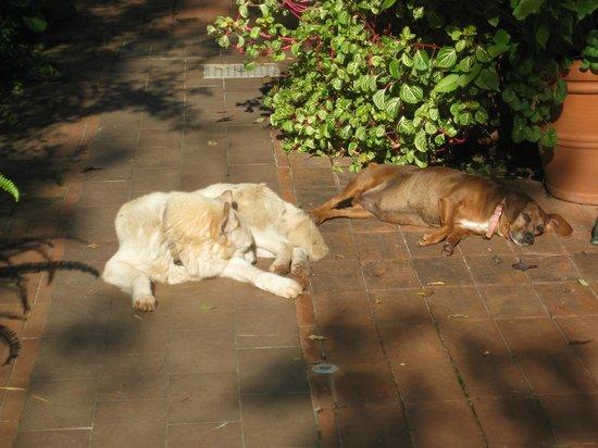 Il Glicine - Piana dei Colli: Gabriella's two beloved dogs enjoying the winter sun