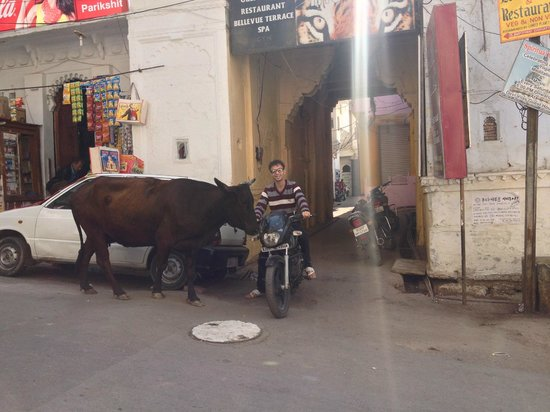 Cafe Edelweiss: The cow didn't learn the highway code