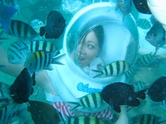 Seawalker Tours: the fish loves to be around with me..