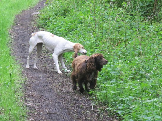 Hawks on Walks: Let's not forget the dogs!