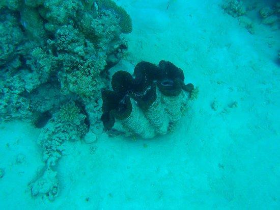 Pacific Resort Aitutaki: Snorkeling on the Aitutaki lagoon day trip