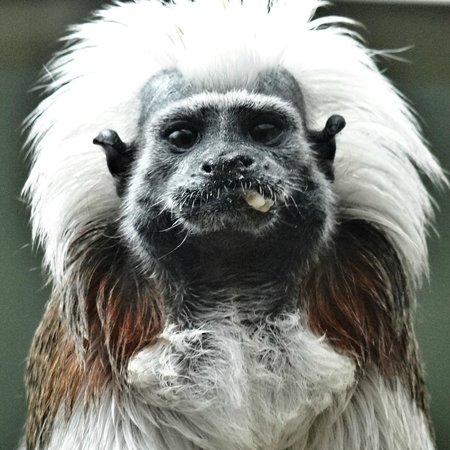 Zoo de Servion : Singe