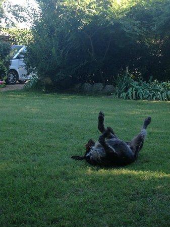 Mas de la Croix d'Arles: Friendly Ethan enjoying himself
