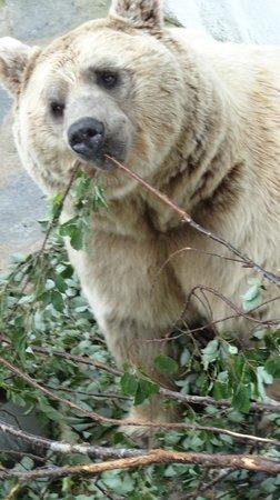 Zoo de Servion : Ours