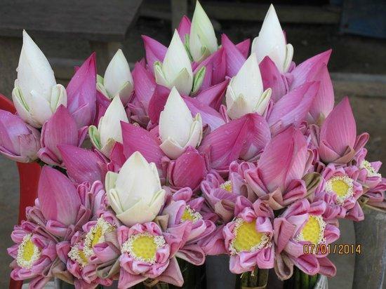 Shinta Mani Angkor : Lotus flowers